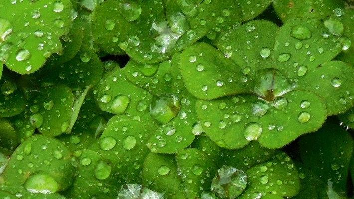 Go Green this St. Patrick's Day for the Environment