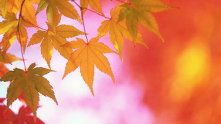 Transition to Autumn and Holistic Health Tips