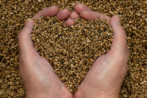 hemp-seeds-hands