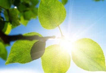 New Spring Holistic Health Classes