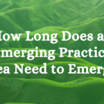 How Long Does an Emerging Practice Area Need to Emerge?